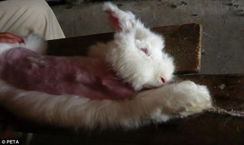 Ban Angora Rabbit Fur PETA